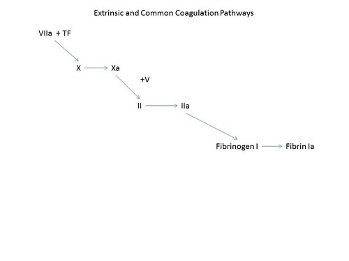 Coagulation extrinsic pathway | by Pathology Outlines