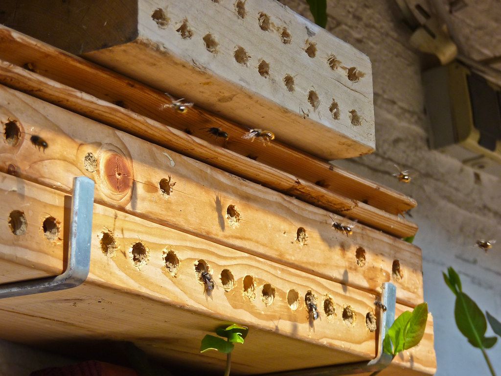 Mason Bee Hotel - Cheap alternative to purchasing anything.
