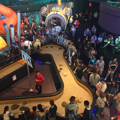 View of the crowd around the horseshoe crab touch tank: at Ripley's Aquarium in Toronto