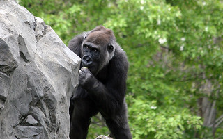 Outdoor Exercise | by Lincoln Park Zoo
