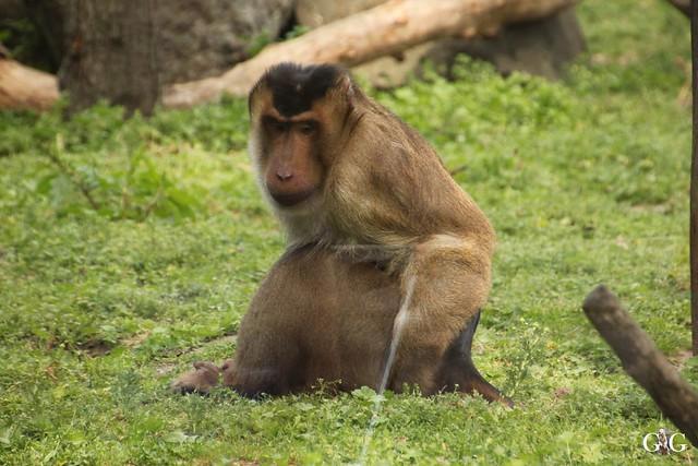 Tierpark Friedrichsfelde 29.05.201699