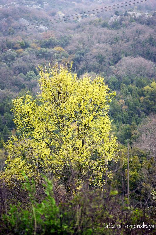 Пейзаж с ярким деревом