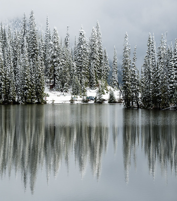 trees reflected in lake