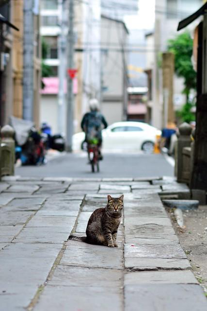神社でくつろぐネコの写真