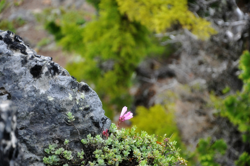 Triangulation Peak Hike 10 @ Mt. Hope Chronicles