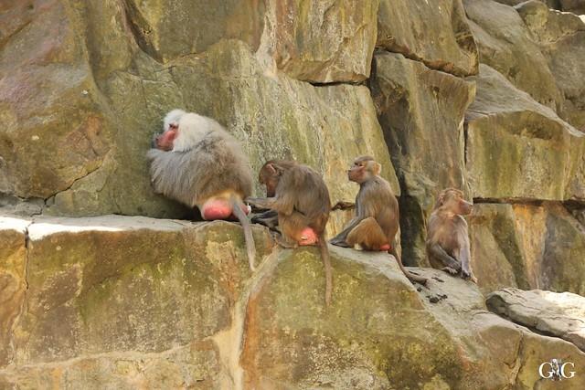 Besuch Zoo Berlin 22.05.1660
