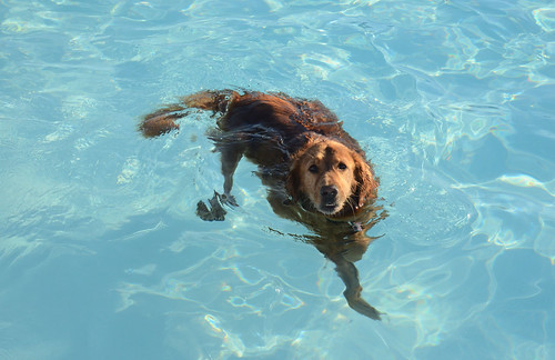 Dogs Make A Splash At Pooch Plunge