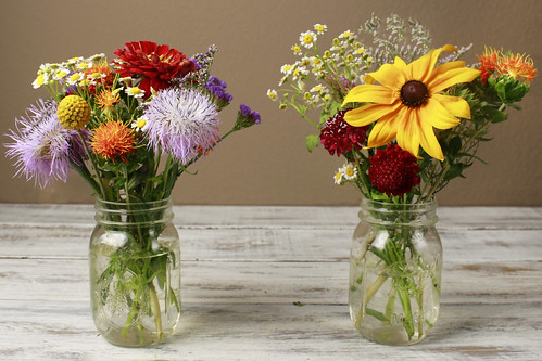 How to Care for Your Fresh Cut Flowers in 5 Easy Steps