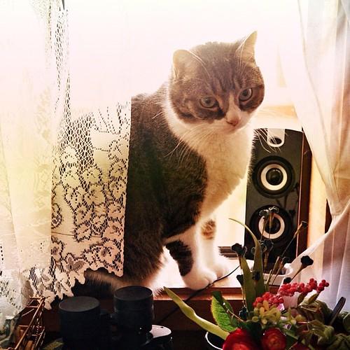 Uni jn the Cat Café, enjoying some birdwatching and music.