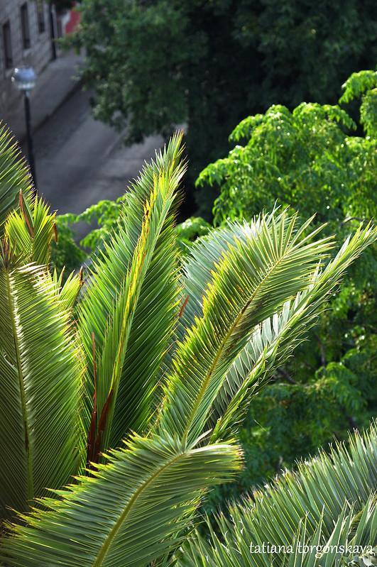Пальма, освещенная утренним солнцем