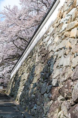 城壁と桜 1