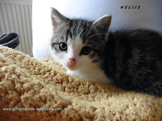 Nellie (2)