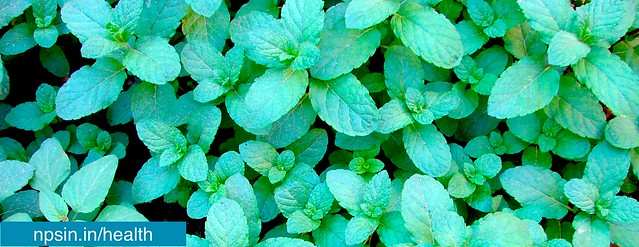 Benefits of Mint in Summer