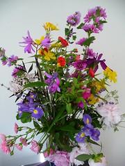 Flowers that bloomed in my garden
