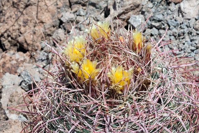 Mojave2016-9162