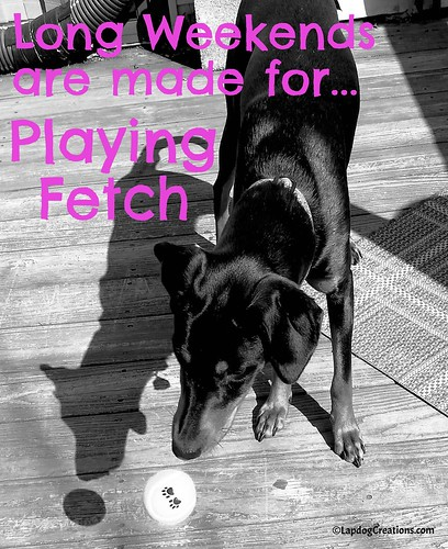 Pennys says, Long Weekends are made for Playing Fetch #dobermanpuppy #rescuedog #adoptdontshop #LapdogCreations ©LapdogCreations