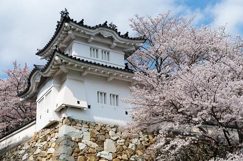 龍野城の桜 4