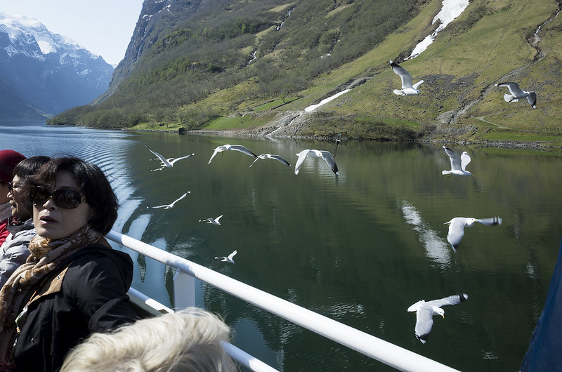 Seagulls at Fjord.
