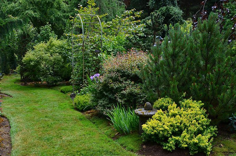 """Matsu Kaze"" (Wind in the Pines), Roger & Judy McElhaney garden, Vancouver, Washington"
