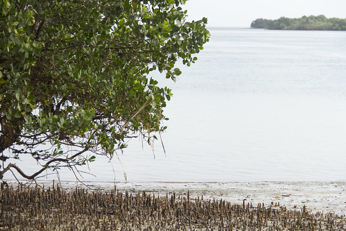 Healthy mangroves mean a healthy ocean and fish stocks in Bagamoyo, Tanzania. Photo by Samuel Stacey, 2013.