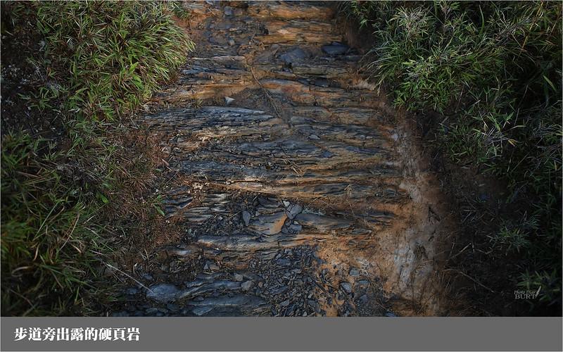 步道旁出露的硬頁岩