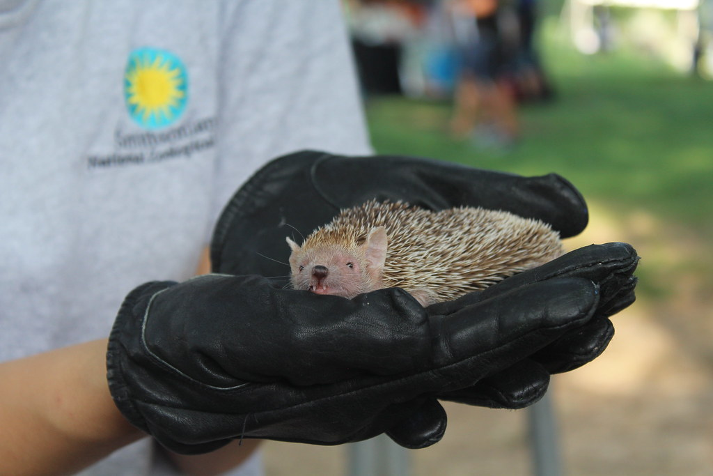 Tenrec at Brew at the Zoo fundraiser for Wildlife at the National Zoo in Washington DC.