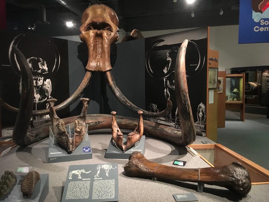 woolly mammoth is so huge