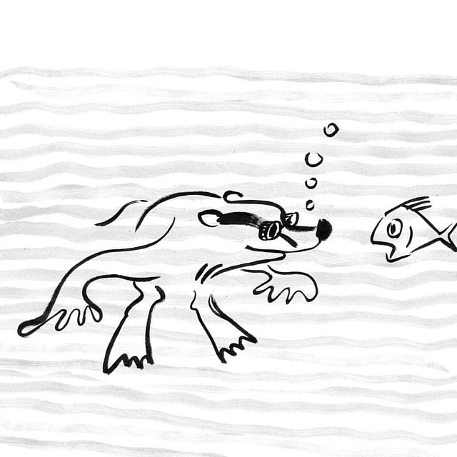 Meeting #badger #badgerlog #parenting #swimming #fish #sea