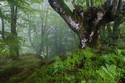 Parque Natural de #Gorbeia #Orozko #DePaseoConLarri #Flickr - -486