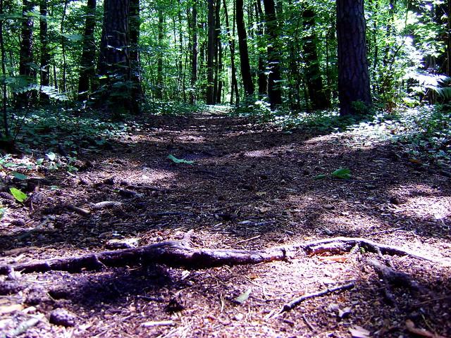 ścieżki wcale nie rowerowe