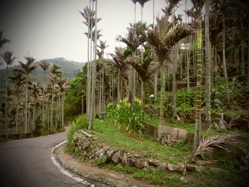 Taiwan Island trips X Couchsurfing。嘉151鄉道隨拍。太平36灣 (25)