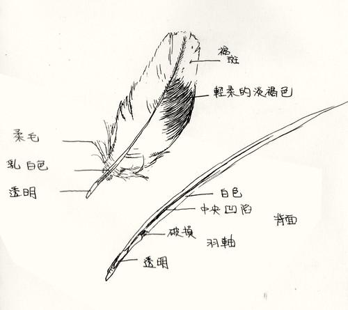 《自然日記。日記自然》4th.