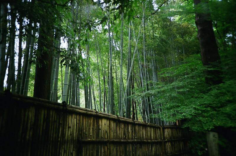 京都:竹林 / 銀閣寺