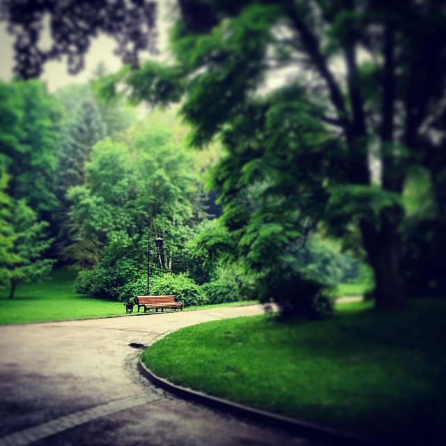 #lviv #ukraine #stryiskyipark #park #summer #landscape #lvivgram #lvivblog #lviving #ualviv #lemberg #lvivgroup