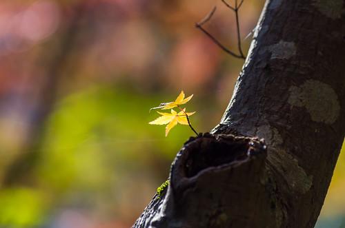 紅葉狩り - 東山公園 22