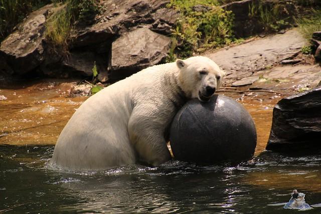 Tierpark Berlin 28.05.2016  0148