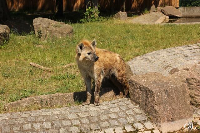 Tierpark Friedrichsfelde 29.05.201619
