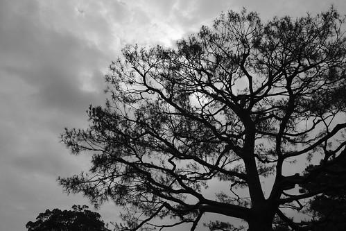 栗林公園は松の公園だった。