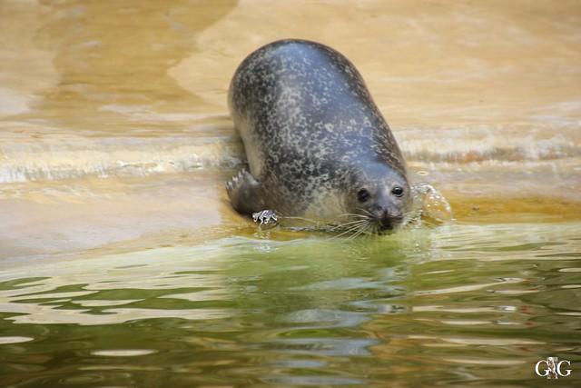 Sonntags-Besuch Zoo Berlin 19.06.201636