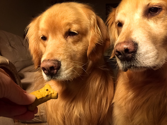 More Cookies, Please!