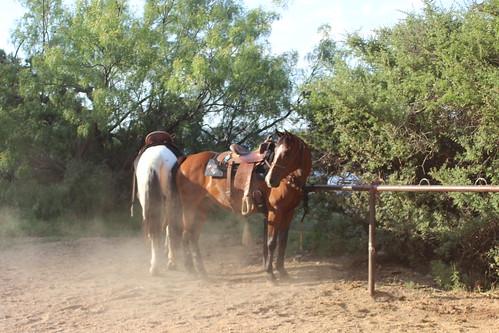 Texas Musical 061816 (81)