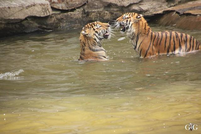 Tierpark Friedrichsfelde 29.05.201689
