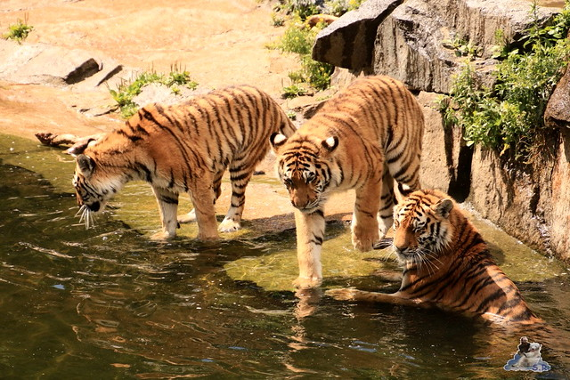 Tierpark Berlin 18.06.2016  0156