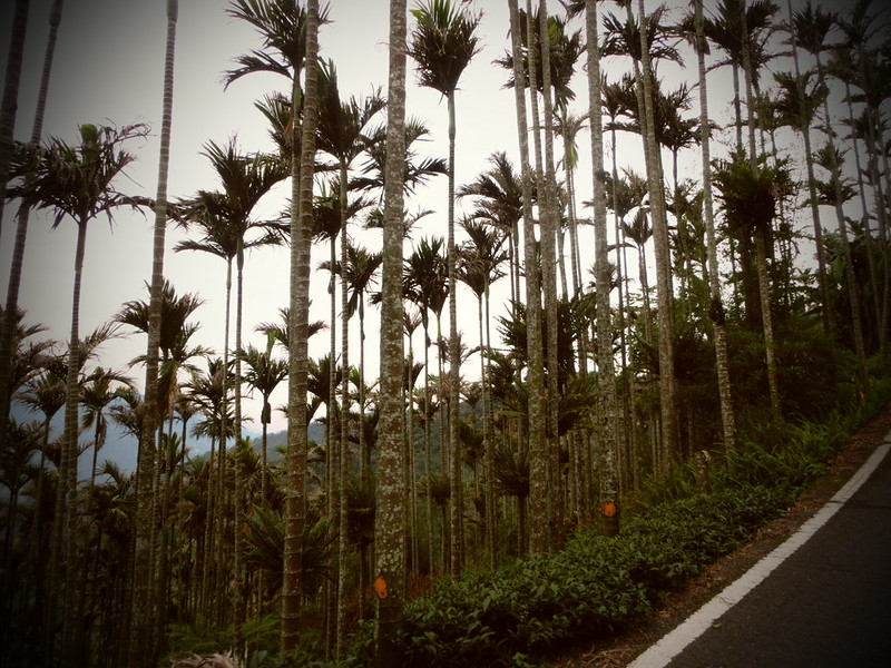 Taiwan Island trips X Couchsurfing。嘉151鄉道隨拍。太平36灣 (27)