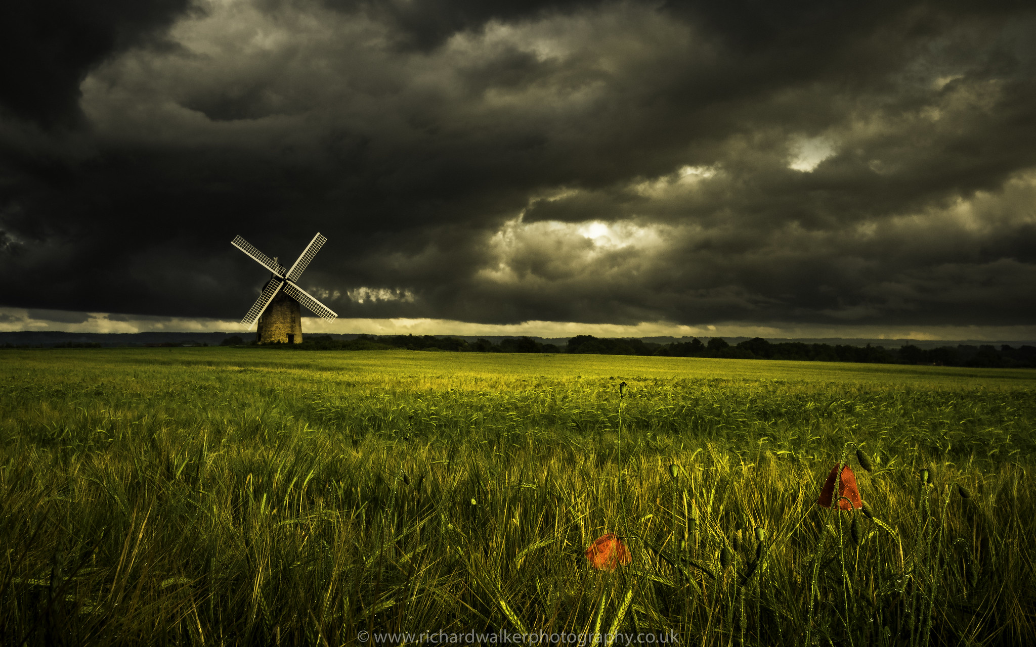 Windmill and Poppies