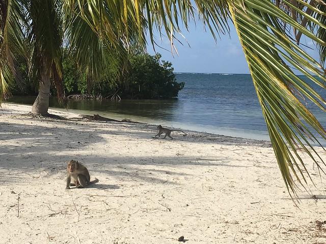monkey-island-idj