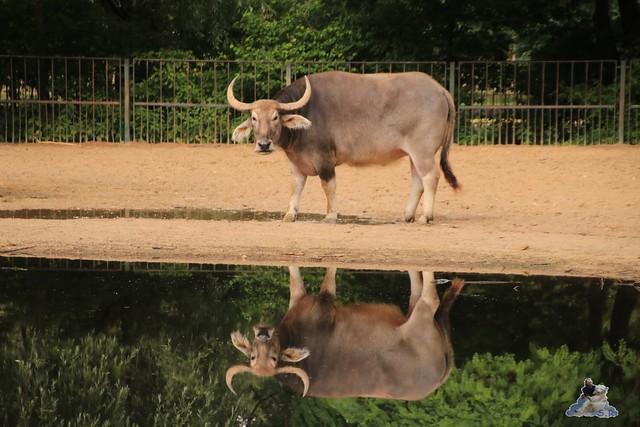 Tierpark Berlin 18.06.2016  097