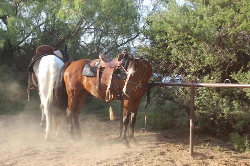 Texas Musical 061816 (78)