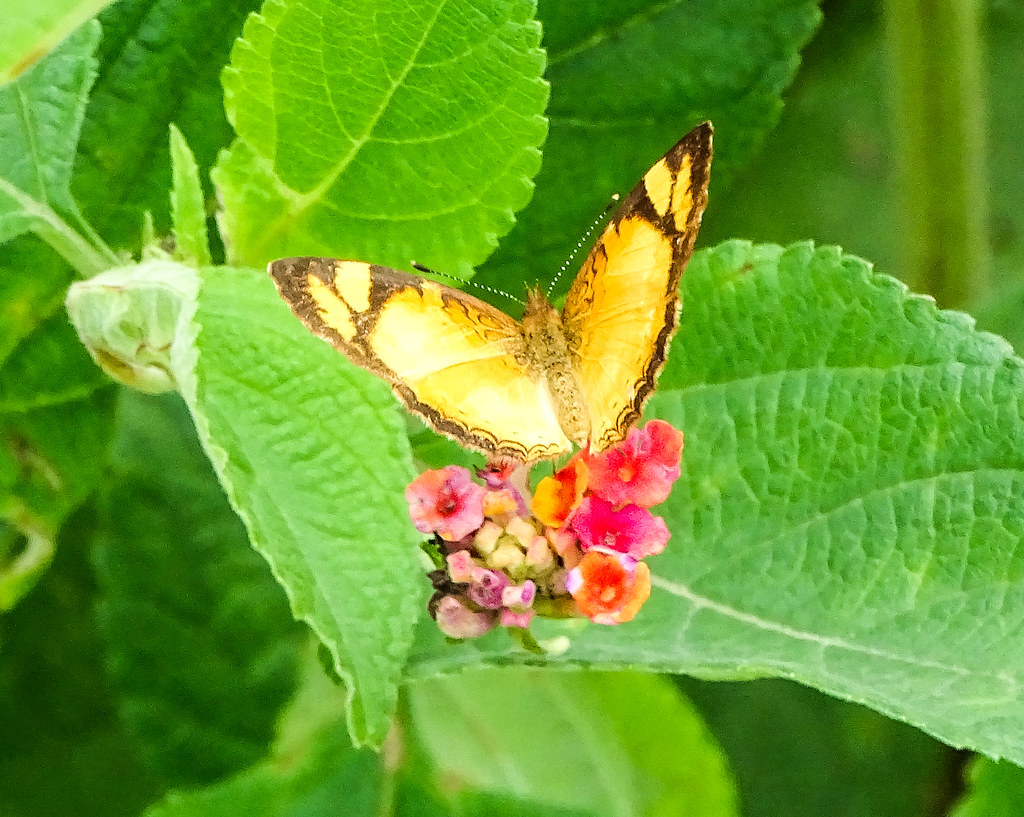 Beautiful buterfly