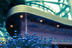 Flower_36